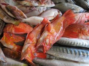 Azoren_Fischmarkt