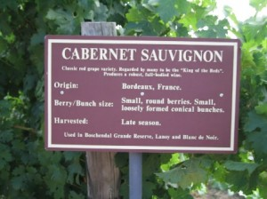 Südafrika_Weinsorten17