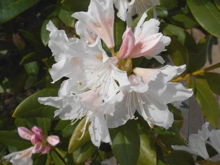Blühende_Pflanzen_04
