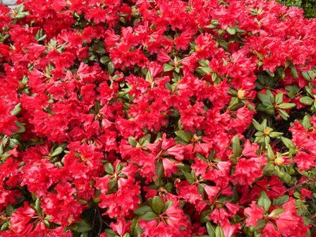 Blühende_Pflanzen_11